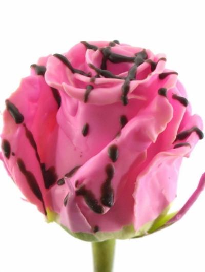 ROSA CHOCOLAT STRIP PINK 60cm