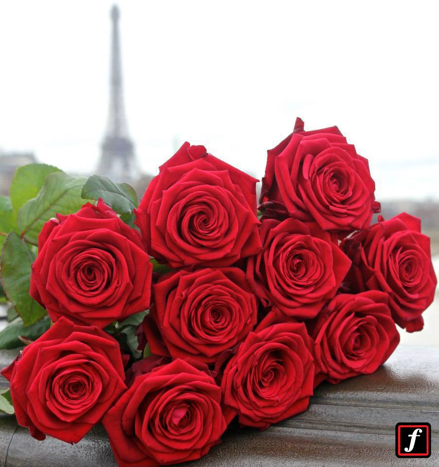 Zdroj: Fransen Roses