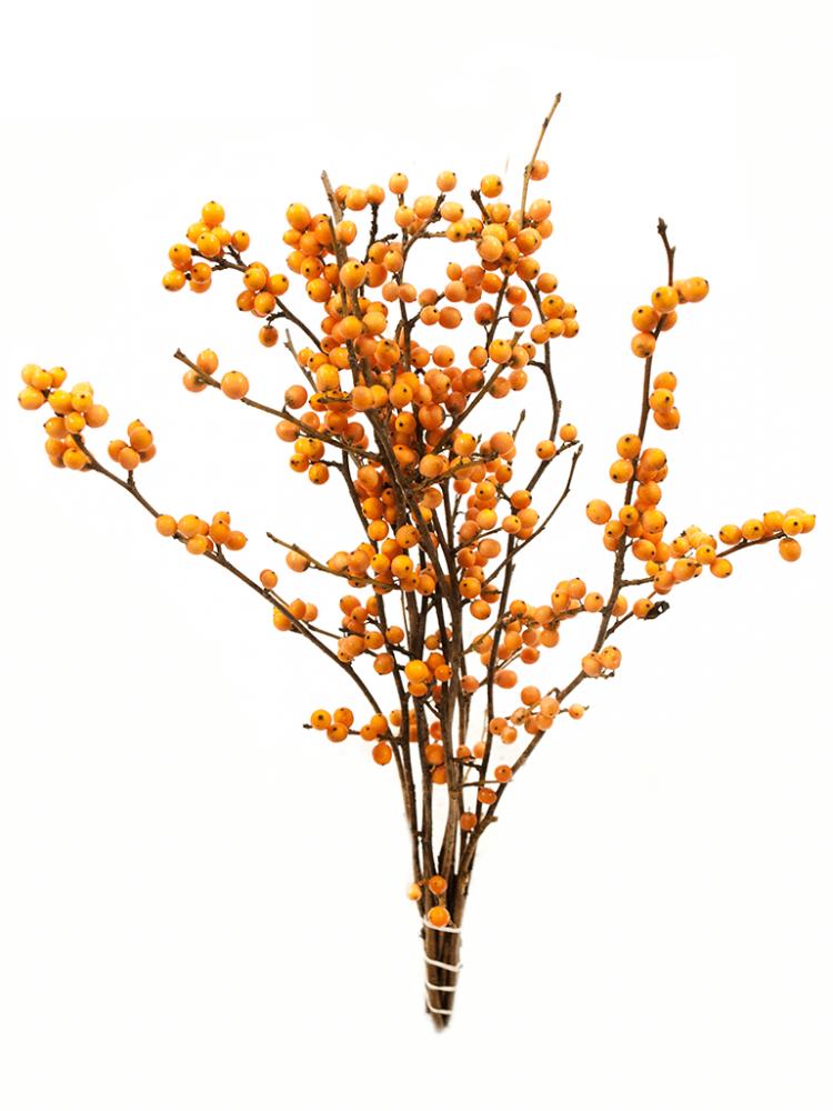 Oranžová cesmína