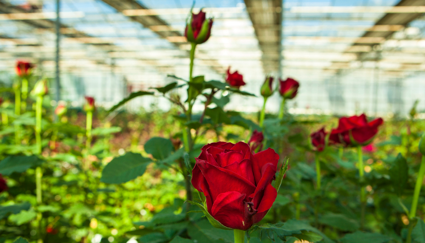 Květinová farma