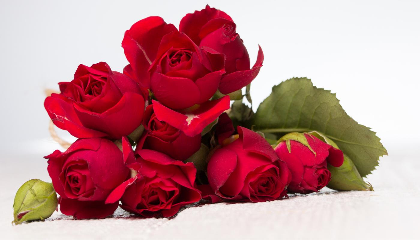 Čerstvé červené růže vydrží i 3 týdny
