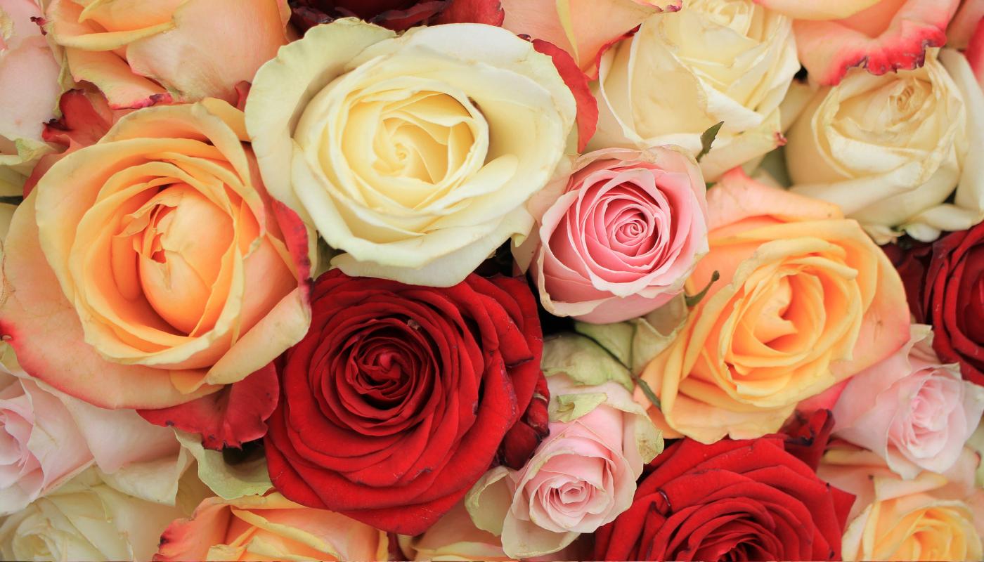 Mix růží