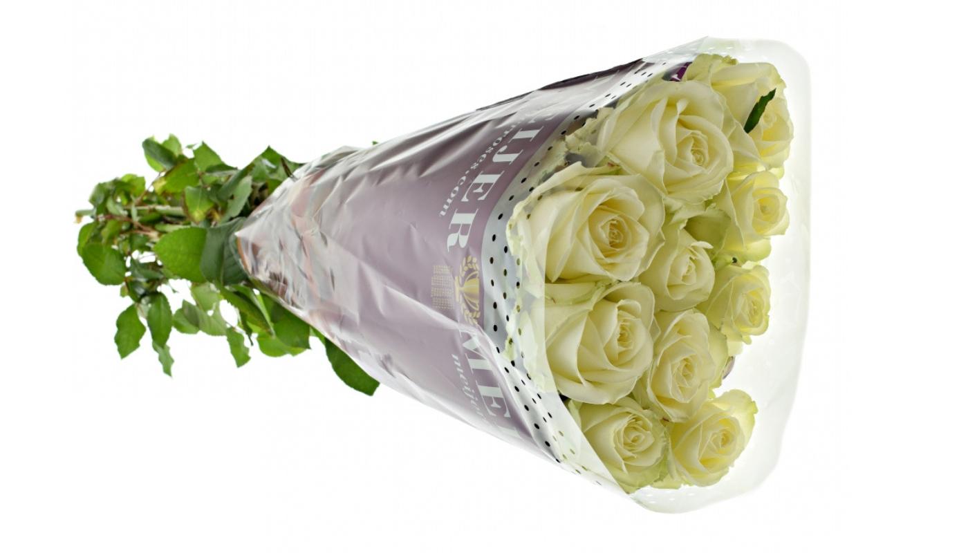 Růže Avalanche dlouhé 1 metr