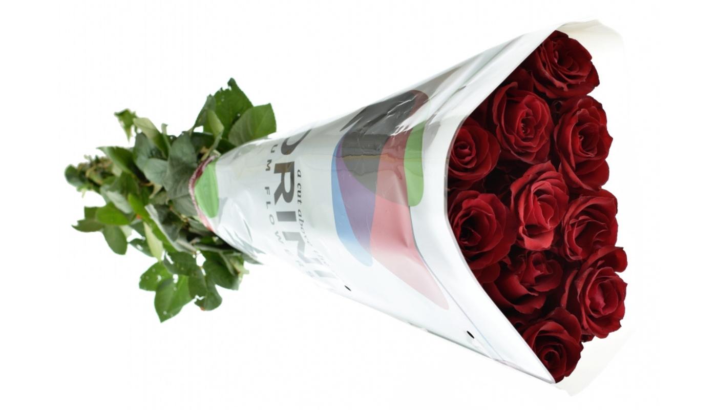 Růže Red Ever dlouhé 1 metr