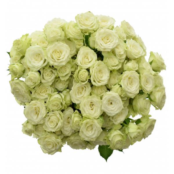 Trsová růže Green Glow
