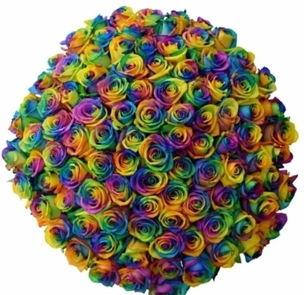 kytice-100-duhovych-ruzi-rainbow-florea.jpg (248 KB)