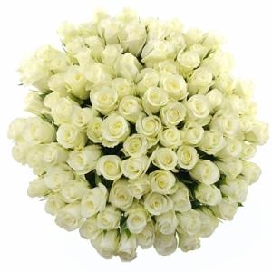 Význam barvy bílých růží