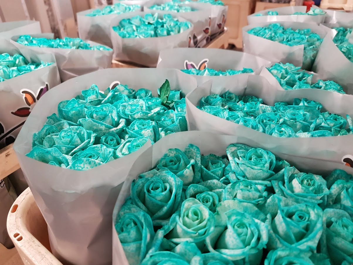svetle-modre-ruze-florea.jpg (247 KB)