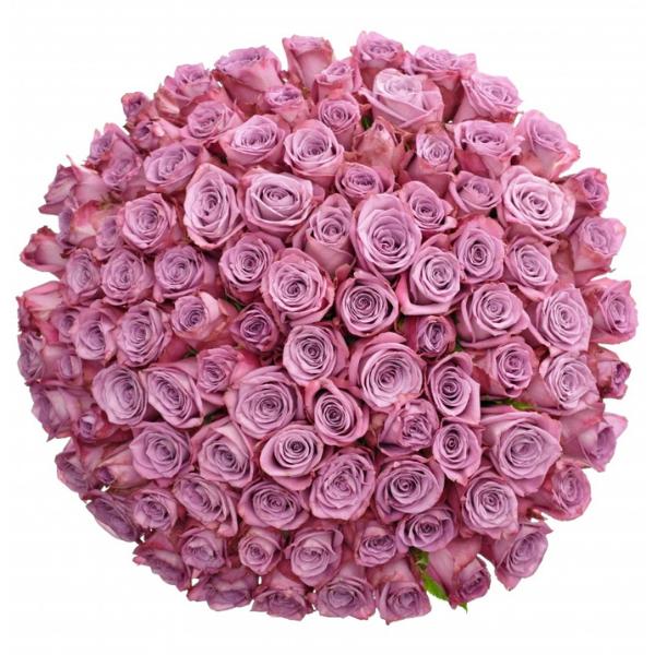 Kytice 100 fialových růží Maritim