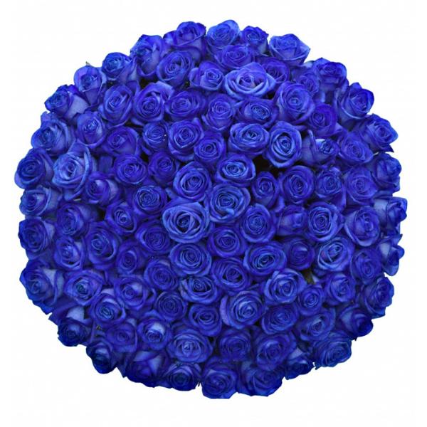 Kytice 100 modrých růží Vendela