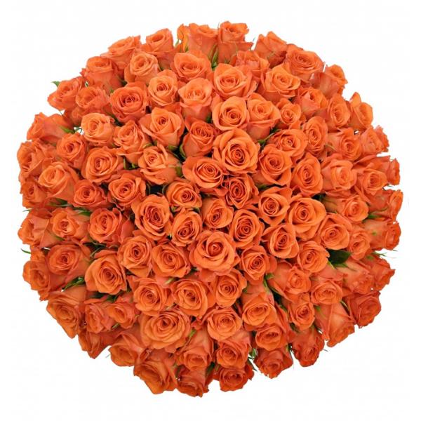 Kytice 100 oranžových růží Patz