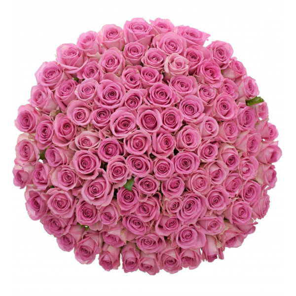 Kytice 100 růžových růží Aqua