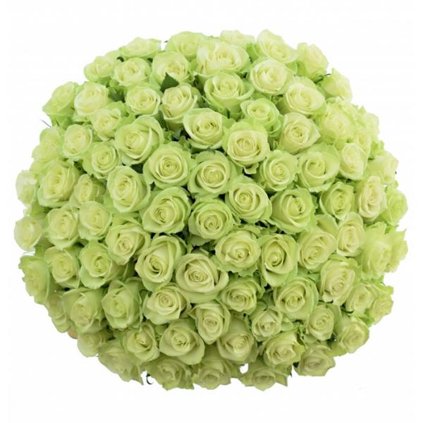 Kytice 100 zelených růží Noelle