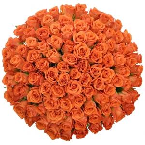 Význam barvy oranžových růží