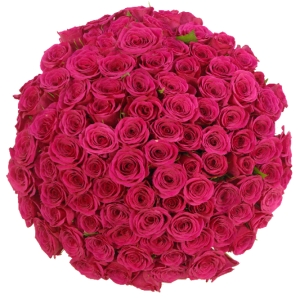 Růžové růže - význam