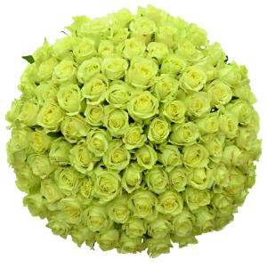 Význam zelených růží
