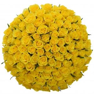 Žluté růže a jejich význam v květomluvě