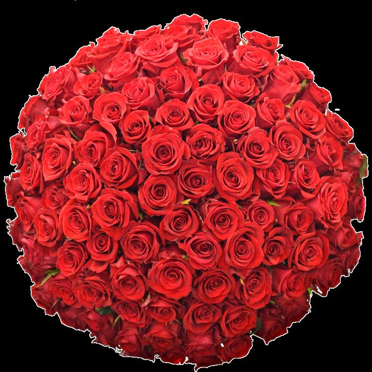 Kytice 100 rudých růží.png (895 KB)
