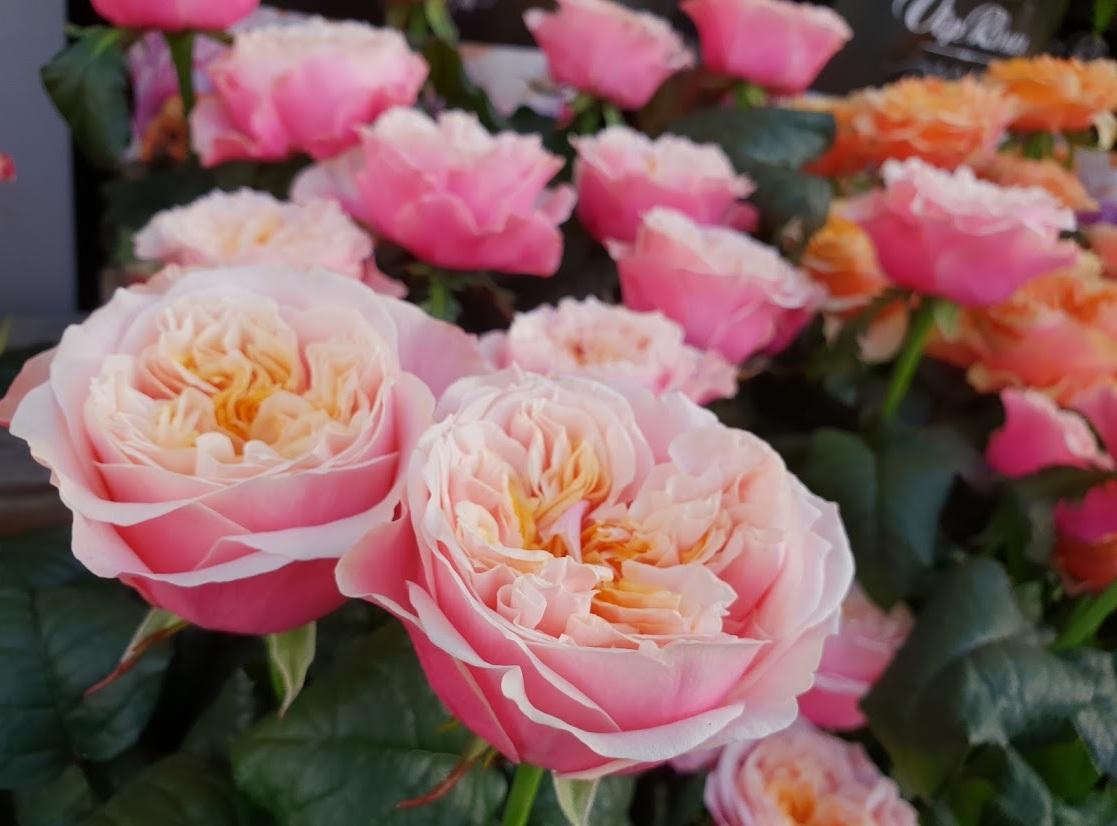 svatebni-ruze-vip-roses-1.jpg (178 KB)