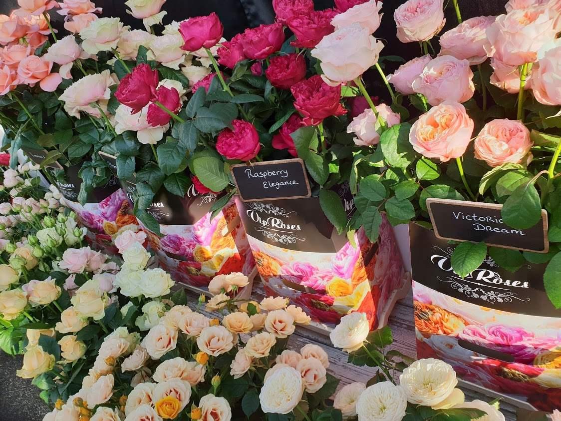 svatebni-ruze-vip-roses-2.jpg (176 KB)