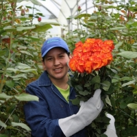 BellaRosa – pěstitel ekvádorských růží