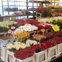 Fotoreportáž – styl prodeje květin v Nizozemí