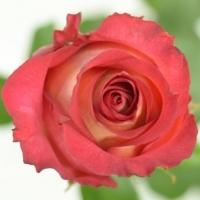 Jak pečovat o řezané květiny 1