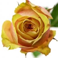 Jak pečovat o řezané květiny 3