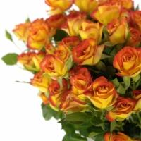 Liché a sudé počty květin: Jak to mají v USA?