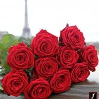 Květinové království Fransen Roses