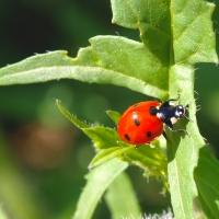 Biologické hubení škůdců: Chemie je out
