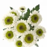 Dušičky a chryzantémy. Jak to vlastně je?