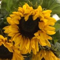 Květiny podle znamení zvěrokruhu