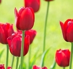 Poslové jara a další jarní květiny