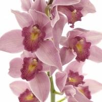 Díl první: orchideje a co o nich možná (ne)víte