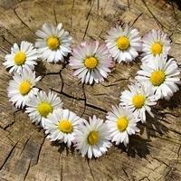 Květinové tradice, fámy a pověry