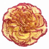 Jak krátit stonky řezaným květinám