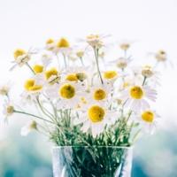 Díl druhý: květiny podle hosta