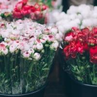 Počet květin letem světem