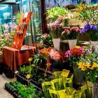 Proč se ceny květin v květinářství tak liší?