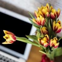 Květiny do kanceláře, které vám zpříjemní týden