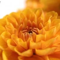 Hezky přehledně: životnost řezaných květin