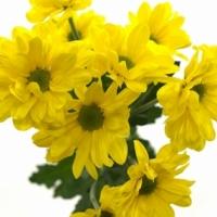 Jak nakupovat květiny v našem květinářství 2