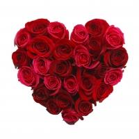 4 dokonalé rudé růže k Valentýnu