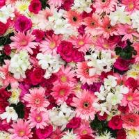Nejlepší květinové alternativy kvalentýnským růžím