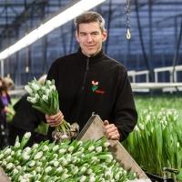 Triflor - pěstitel tulipánů