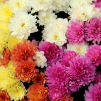 Květomluva - emoce beze slov