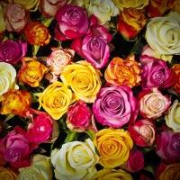 Květomluva - slovníček od A do Z