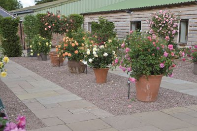 Zahradní centrum David Austin
