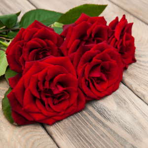 Řezané růže z Florea.cz vydrží čerstvé i 3 týdny. Čím to?